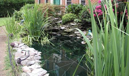 Water Garden Pond Designers Installers Virginia Landscapes